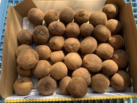 お得!ジャムにも!チビチビ極美味キウイフルーツ 超小粒 箱無し 1kg(30個以上)