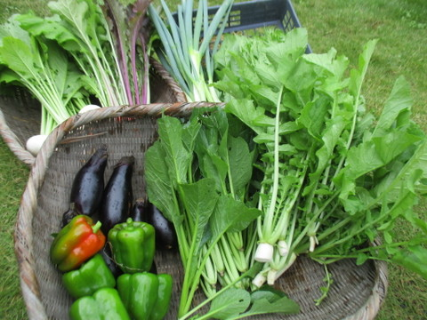 【自然農】旬の野菜セット 不耕起栽培の本来の味のする野菜