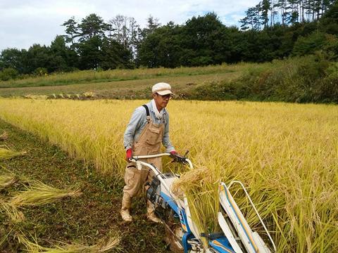 玄米(コシヒカリ)10kg はぜ掛けで美味しさ凝縮