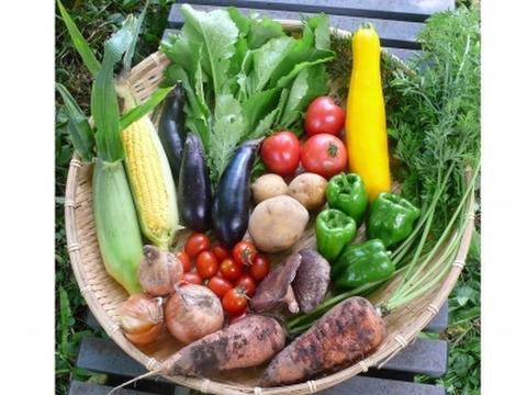 自然栽培 水輪の心まで癒すお野菜セット Mサイズ