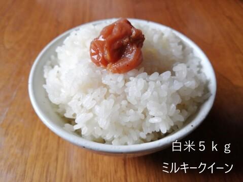 新米2020 黄金の実り【5kg】京都産ミルキークイーン  【玄米ご希望の方は備考欄よりリクエストおねがいいたします。】