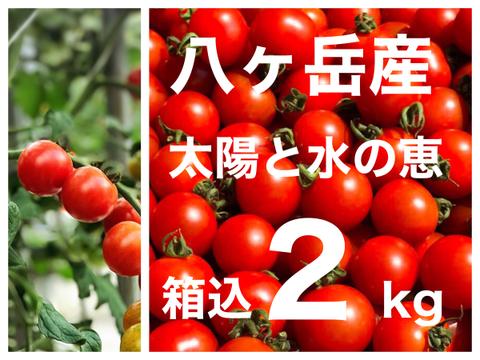 パクパク ミニトマト 箱込約2kg  味濃いめ  お子様も食べやすい! 八ヶ岳産  品質保証あり