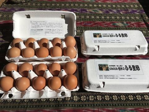 生食に最適! 放し飼いの鶏が産んだ卵40個入り