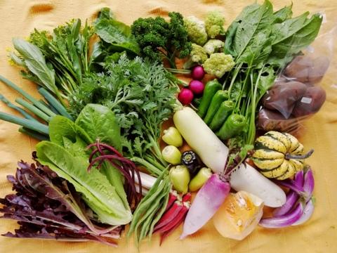 無農薬野菜セットLL