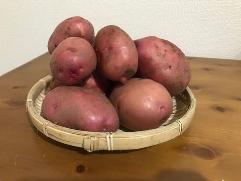夏季限定!アンデスレッド4kg+新鮮野菜付き!
