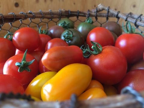 彩り有機ミニトマトの詰め合わせ