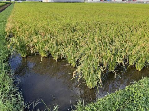 もっちり、つやつや!5分づき米9kg 喜多村家のお米 こし