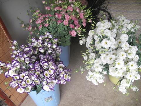 ボリューム満載ブランド花。鑑賞期間ロング、多種アレンジ、。。~セレクション35本、60cm(60輪~<近くて遠い貴方。いまのいままで有難う。>