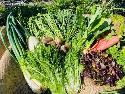 京都から旬の野菜を詰め合わせ6品目野菜セット
