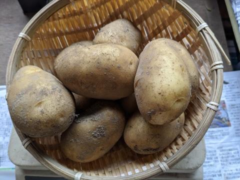 【農薬化学肥料 不使用】じゃがいも≪シンシア≫小粒3kg
