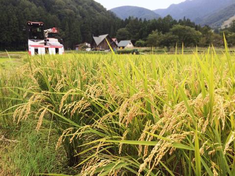 特別優秀賞【30kg】コシヒカリ「玄米」【令和2年産】