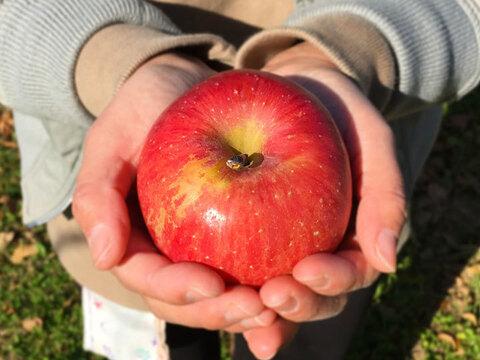 りんご サンふじ【小玉約5㎏】約19-28玉