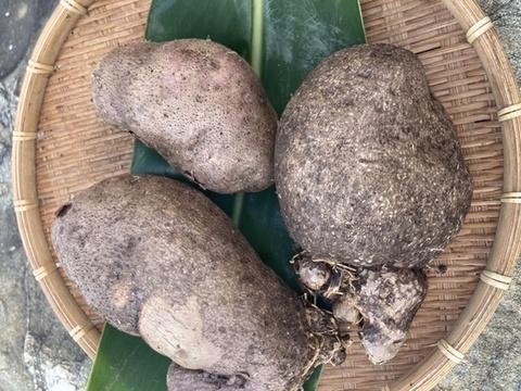 与論在来種!食物繊維たっぷり山芋‼︎オーガニックエコフェスタ優秀賞受賞‼︎ 有機JAS認定アカヤマン(1000g)