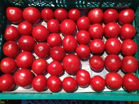 【先行予約販売】昔のトマトの味!本来のおいしさ♪ 自根トマト(大玉)1箱