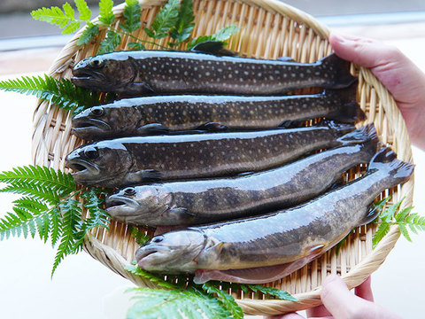 渓流の王者 イワナ 5尾 100 1g 塩焼きサイズ 石川県産 食べチョク 農家 漁師の産直ネット通販 旬の食材を生産者直送