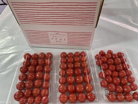 甘いだけじゃない!プチぷよ【3パック】美味しいミニトマトはいかが?