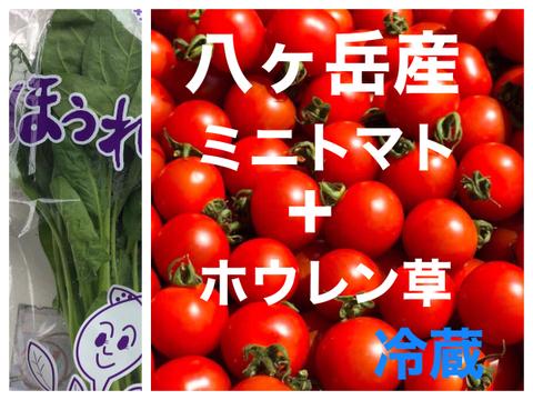 (数量限定)コクトマ!コクがあって味濃いめミニトマト(箱込み約1kg)と無農薬サラダほうれん草2束   野菜の苦手なお子様にもオススメ!