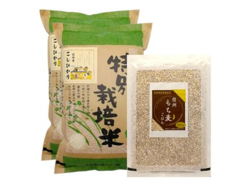 【セット商品】残留農薬ゼロ 信州産こしひかり白米10kg+もち麦800g
