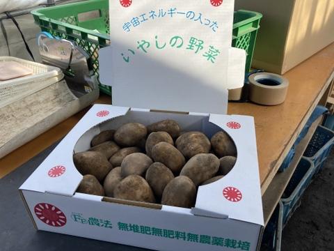 フライドポテトや揚げ芋にも最適!『トヨシロ』さん(3kg)ポテチ用品種 癒しの野菜 【栽培期間中 肥料・農薬・たい肥不使用】