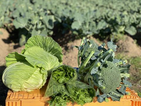 ブロッコリーが人気!あつし農園の野菜セット【5品目】