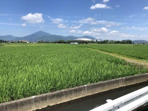 阿蘇山から湧き出る美味しい水で育てたお米(2Kg)