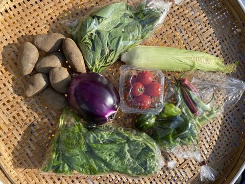 【千葉県産】綾善の野菜詰め合わせ お試し8品 60サイズ
