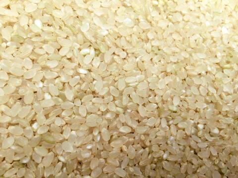 アイガモ米 五分搗米10㎏
