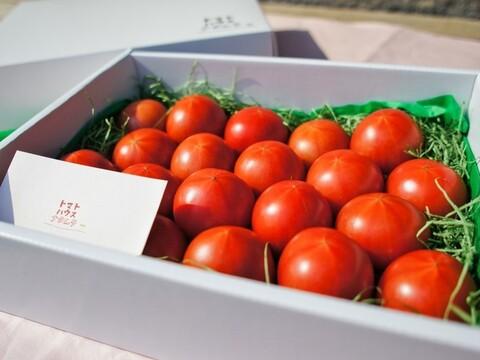 【秀品・化粧箱入1kg】コクと旨味をギュっと濃縮!フルーツトマト【冬~春が旬!】