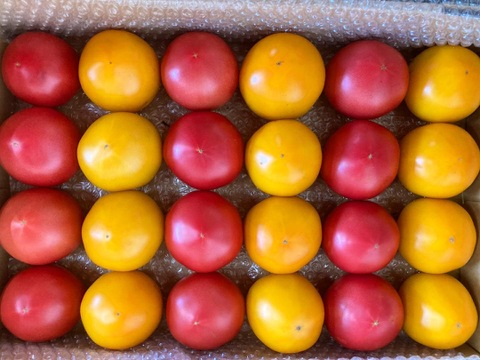 【すずなり完熟トマト‼︎】赤・ゴールド混合4kg