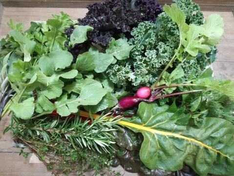 今が旬!!のらぼう菜と冬越しリーフサラダとハーブのミニセット