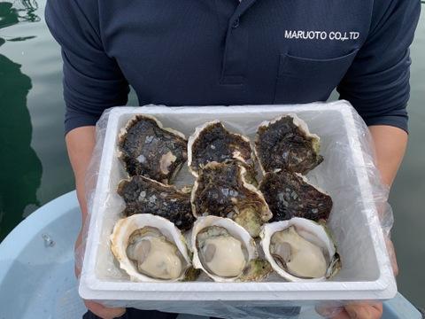 【超極濃9個入】長崎県 五島列島産 生食用 岩牡蠣  大170-240g 【ナイフ軍手付き】