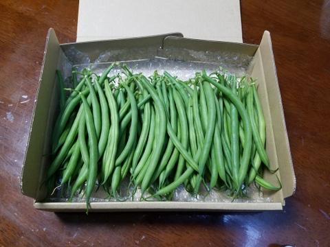 兵庫県産 三度豆(さやいんげん)1.9kg スジナシ新鮮で柔らかく苦みが少ないです。