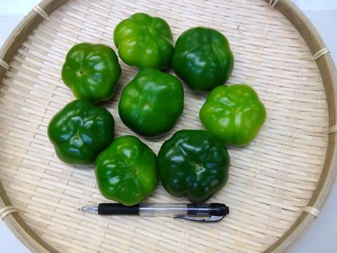 フルーツパプリカグリーン L~2Lサイズ