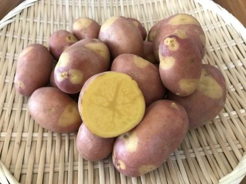 まるで栗みたい!インカのひとみ 2kg【特別栽培】