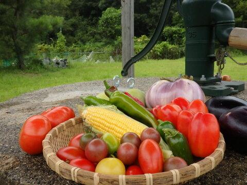 【しと様限定】露地トマト・サンマルツァーノ、ミニトマトミックスなど、夏野菜のセット。
