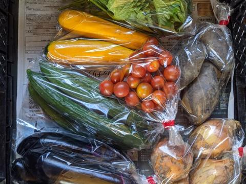 【農薬化学肥料不使用】四季のとれたて野菜少量セット(約7種)
