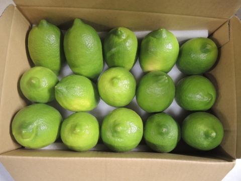 ★和歌山★爽やかな香り!レモン 2kg(ユーレカ種)