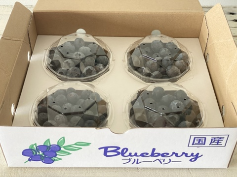 ♢✦国産早生✦♢ 今が旬!大粒ブルーベリー食べ比べセット(100g×4パック)*農薬不使用