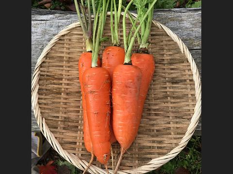 青森県八戸市南郷より 自然農法で育った訳ありにんじん 20kg