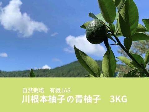 【なくなり次第終了】自然栽培 川根本柚子の青柚子 有機JAS 3kg