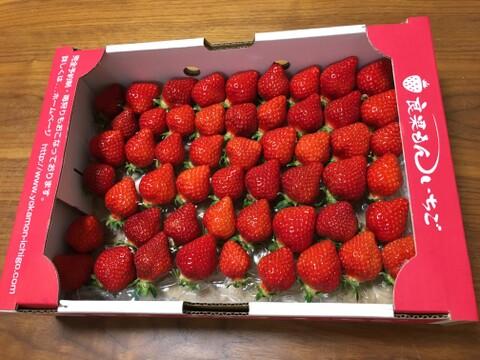 【お買い得!】4品種以上の朝採り新鮮完熟苺(2kg)