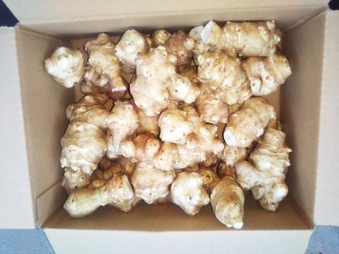 感謝セール 今季最終ロットです。 【健康食始めませんか 菊芋 お試し2kg入り】 世界農業遺産ブランド野菜 農薬不使用栽培