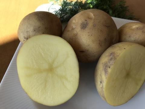 寒っ!甘っ!4人家族で1週間 小さなナガイモじゃがいも(とうや)ゴボウ各1.5kg  タマネギ4.5kg  旨っ❗️北海道の貯蔵野菜は今が旬‼️【おすすめの食べ方付き】