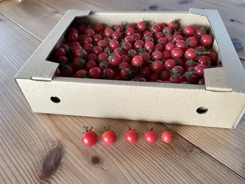 【小粒】ミニトマト1.6キロ 限定5個