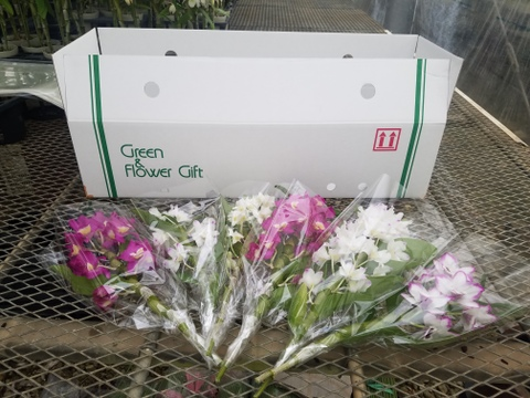【卒業・卒園にみんなで渡そう!!】デンドロビウム切り花6本入~個包装でお届けします~
