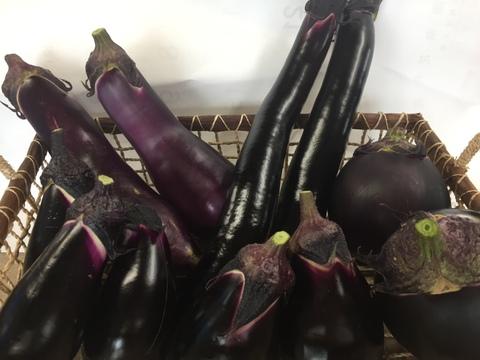 今でしょ!!野菜ソムリエおすすめ茄子食べ比べセット5種類 おまけ付き