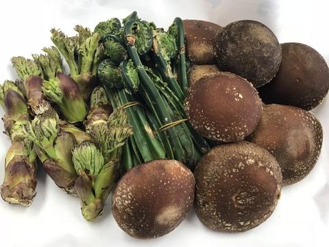 期間限定!山の恵みセット‼︎山菜&きのこ。椎茸1kgと天然山菜2種 (タラの芽、ウルイ、ウド等約400g)