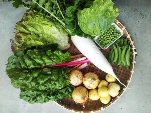 【ライトパック】 少量お試し  田口農園 徳島イチオシ! 野菜セット  世界農業遺産 ブランド認定野菜詰合せ  絶対損はさせません