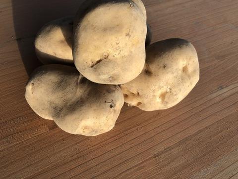【フライ専用品種】ジャガイモ「トヨシロ」混み玉5kg
