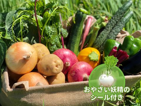 【食育やさいBOX】Mサイズ 旬彩野菜セット8-9品目